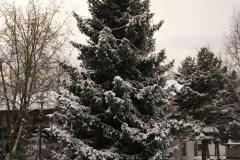 winterigg_01