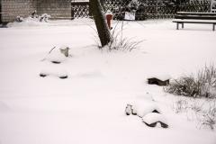winterigg_04